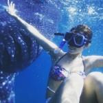 セブ島 ジンベイザメ