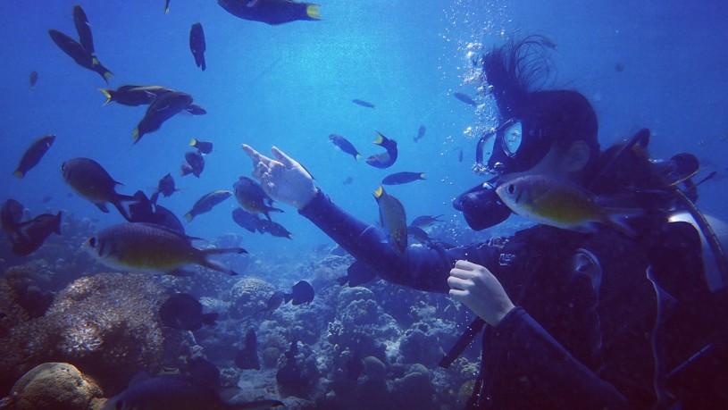 セブ島ダイビング